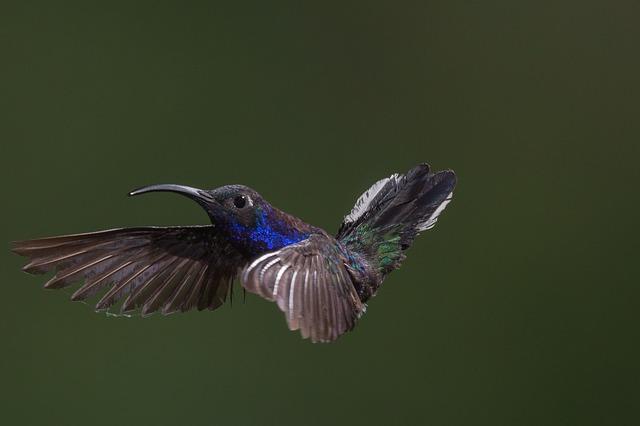 Post Hummingbird og RankBrain – 5 SEO tips der virker i dag